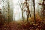 Saveurs d'automne by DavidMnr