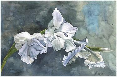drooping white gladiolus by kosharik69