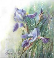 blue iris by kosharik69