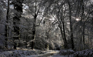 January Chills by hakukamizaki