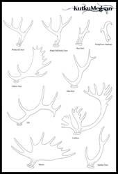 North American Antlers Basic Tutorial -KutkuMegsan by KutkuMegsan