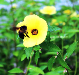Bee by CyanicOrange