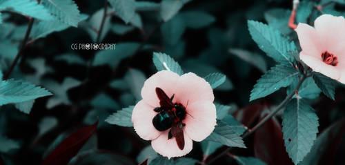 Red Bee by CyanicOrange