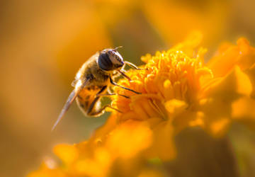 The Busy Honey Bee by teganseever