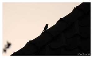 Sparrow by daschristkind