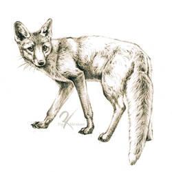 Red fox sketch by oxpecker