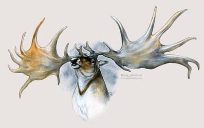 DrawDeercember day 3: Irish elk by oxpecker