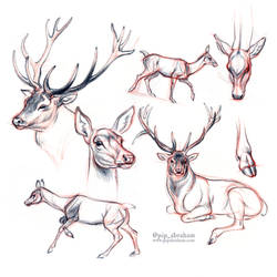 DrawDeercember day 5: Red deer by oxpecker