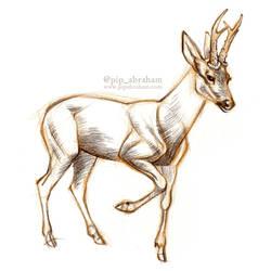 DrawDeercember day 7: Roe deer by oxpecker