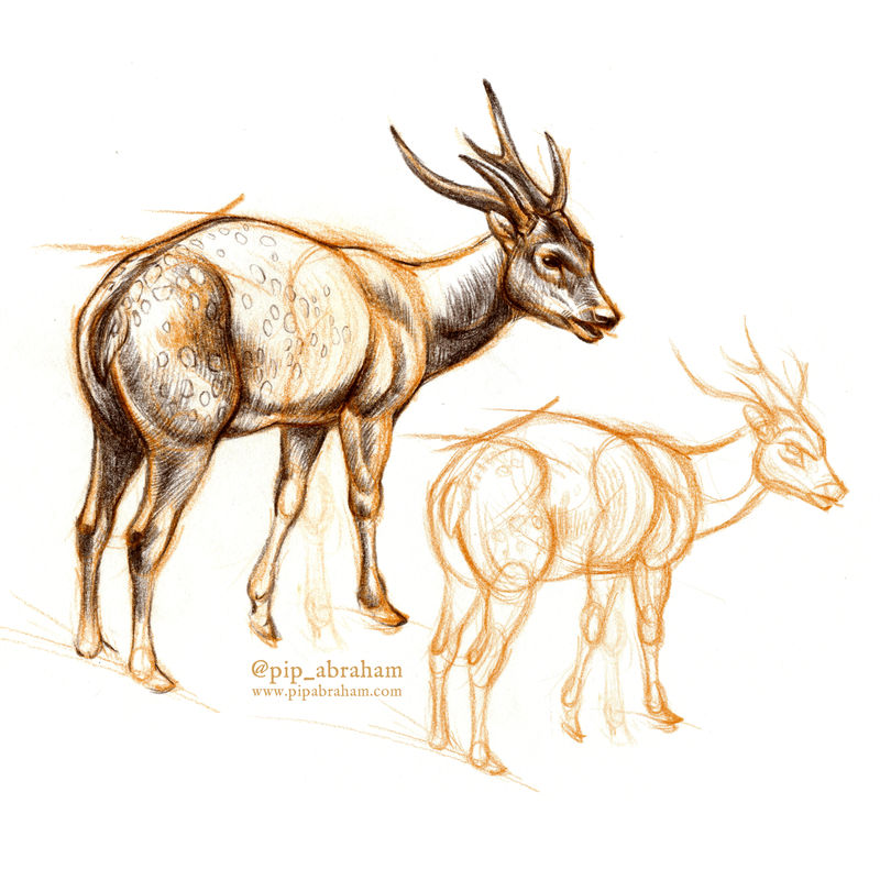 DrawDeercember day 10: Visayan spotted deer by oxpecker on ...