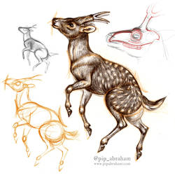 DrawDeercember day 11: Dicrocerus by oxpecker