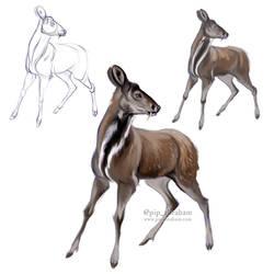 DrawDeercember day 15: Musk deer by oxpecker