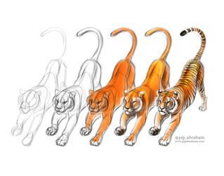 Tiger sketch tutorial by oxpecker