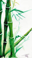 Bamboo Watercolour by davepinsker