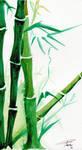 Bamboo Watercolour by davepinsker