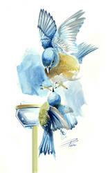 Bluebirds Watercolour by davepinsker