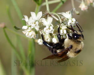 Sand prarie yellowjacket by SparklersOasis