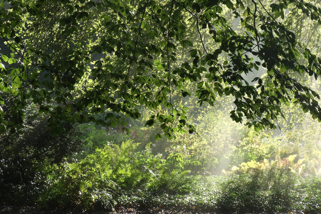 Trees in the morning by CelticWarBoy