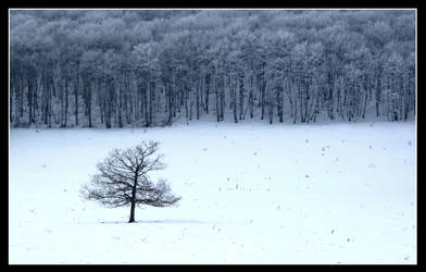 L'arbre ne cache pas la foret by Hocusfocus55