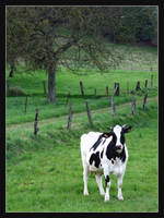 Pretty Cow by Hocusfocus55