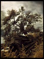 Vanilla Sky AND Pohon Pemimpi by mangkodok