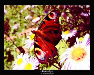 ..:: Butterfly ::.. by Jna1985