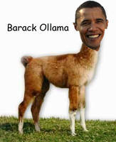 Barack Ollama by LukieSock