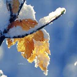 Golden Winter. by andokadesbois