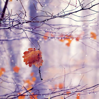 Magical Morning. by andokadesbois