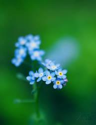 My lovely flowers. by andokadesbois