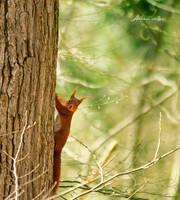 My First Squirrel. by andokadesbois