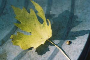 00000173_LadybugLeafShadow by NemoNameless