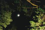 Fh000018_MoonThroughTheTrees by NemoNameless