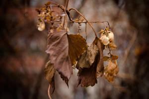 Autumn Impression by BiBiARTs