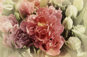 Tulip Magenta by BiBiARTs