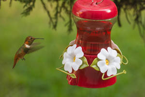 Hummingbird by IntermissionNexus