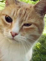 Pirate Cat by fragilesandy
