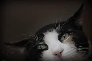 Crazy kitty by Moowna