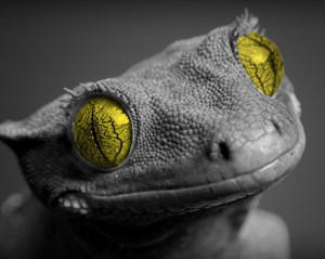 TheIguanaConnector's Profile Picture