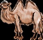 Digital Painting: Cliff the Camel by UkuleleMoon