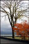 Autumn in Helsinki by eswendel