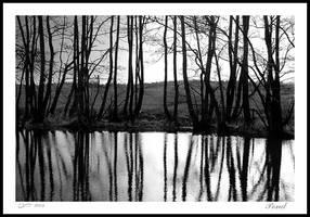 Pond by eswendel