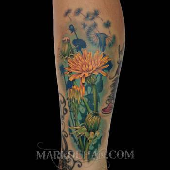 Dandelions by amduhan