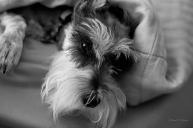 Sleepy Dog by mjrusche