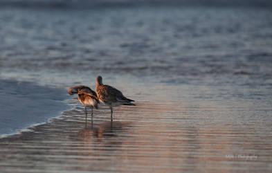 Birds by mjrusche