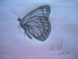 butterfly drawing by AussieNico