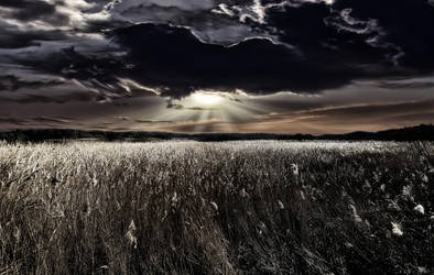 Reeds Of Gold @ Fleet Pond - UK by bullispace