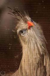 whaddya think yer lookin at by eagle79