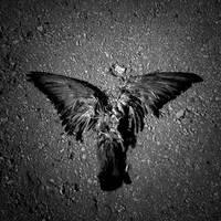 dead angel by Deanse