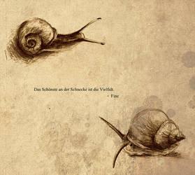 Snail Sketches by karpfinchen